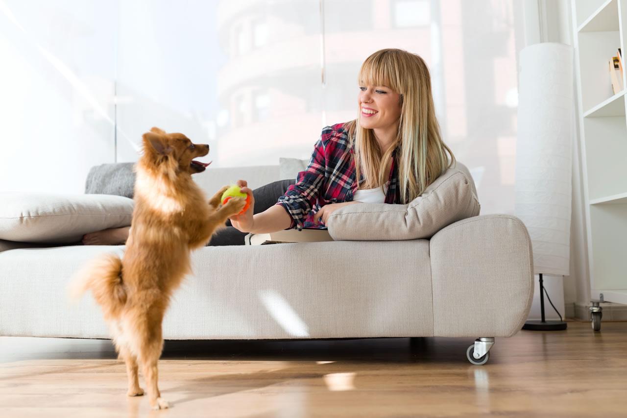 Quali animali domestici posso stare in condominio?